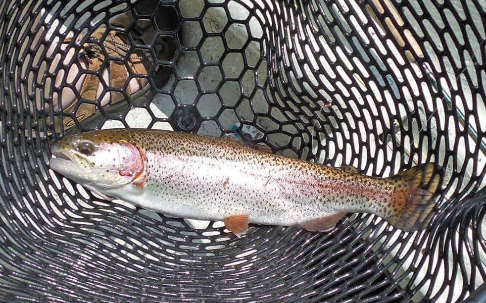 Bobs pretty fish 051113