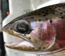 bills-trout-112316